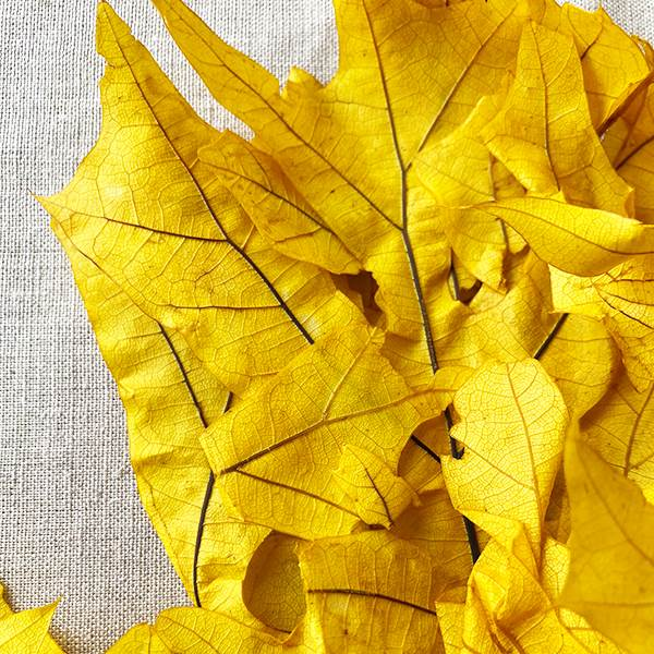 Transparent Oak Yellow