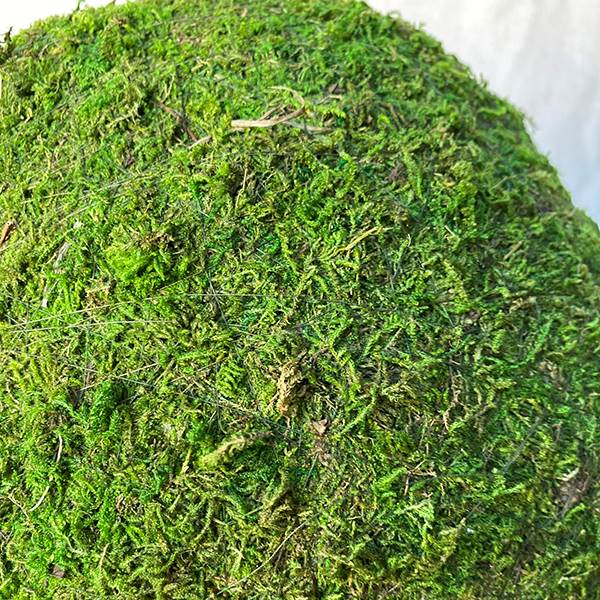 Moss Ball 12 Inches